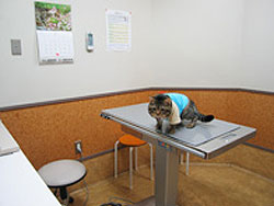 安東本院診察室